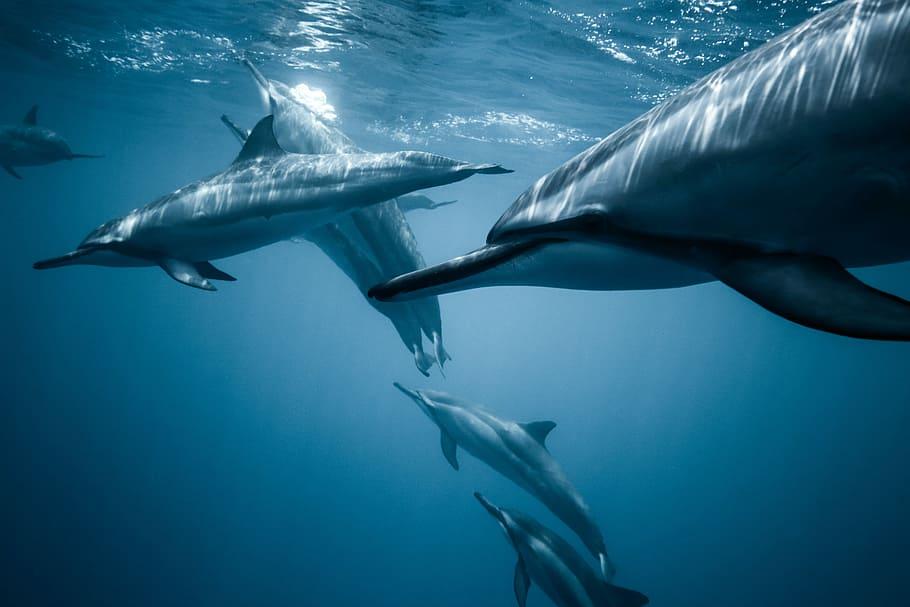 Dolphin snorkel in Kona, HI
