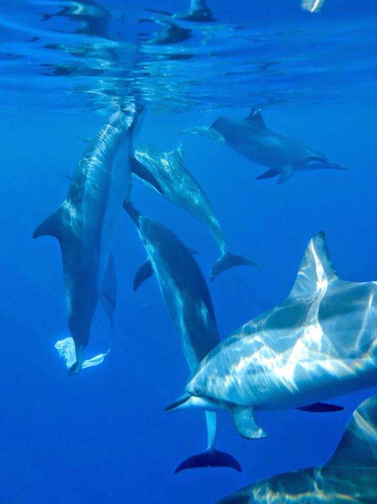 Swim with dolphins in Kona Hawaii