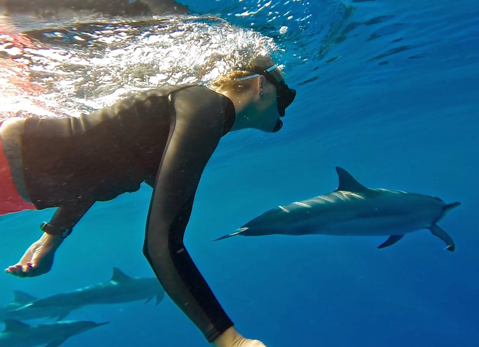 Swim with dolphins in Kona, on the Big Island of Hawaii