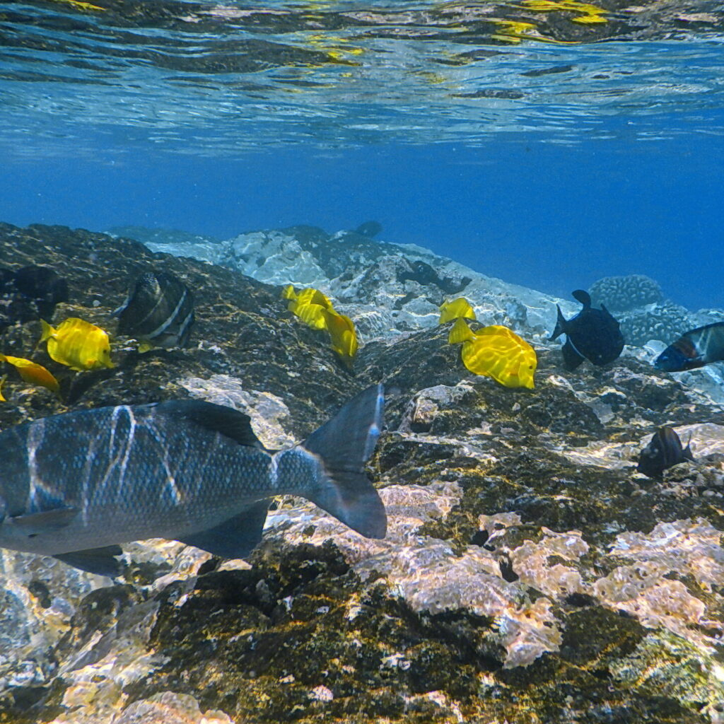 Kealakekua coral reef snorkeling